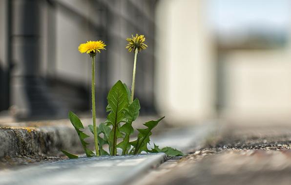 ulica-trava-gorod.jpg