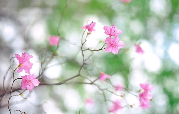 vetka-cvety-rozovye-lepestki.jpg