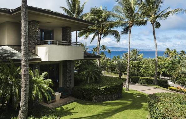 maui-hawaii-luxury-home-palm.jpg