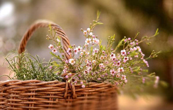 cvety-korzina-priroda.jpg