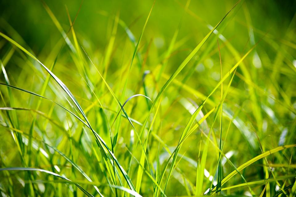 grass-1550025_960_720.jpg