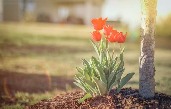 cvety-priroda-vesna-198.jpg