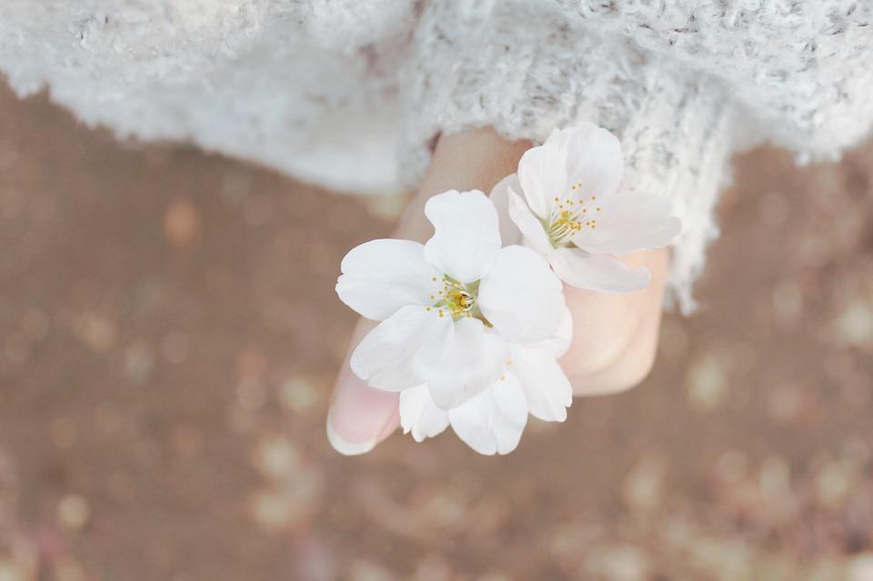 spring-632098_960_720.jpg