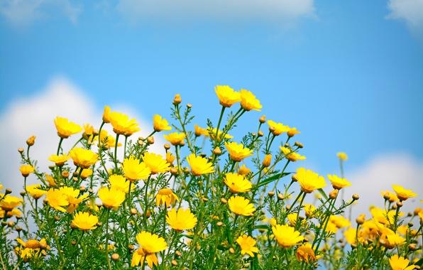 vesna-nebo-tsvety-polevye-pole-spring-solntse-yellow-flowers.jpg