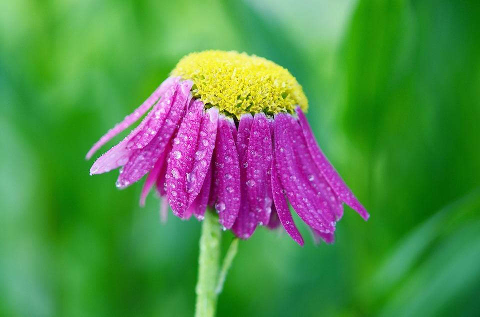 flower-807030_960_720.jpg
