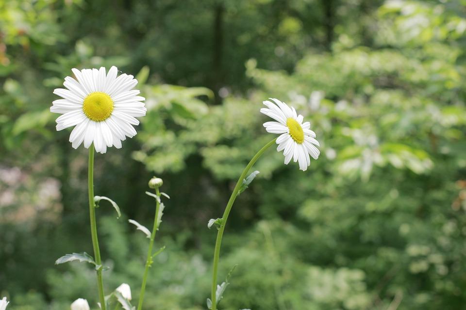 flowers-1338687_960_720.jpg