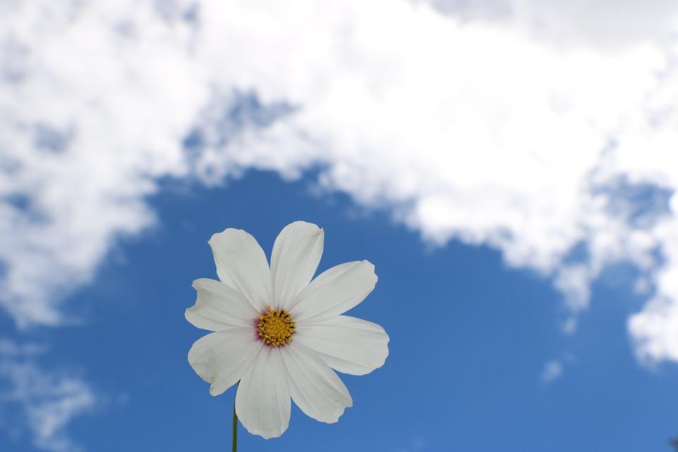 blue-sky-1404535_960_720.jpg