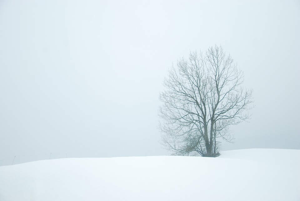 winter-872174_960_720.jpg