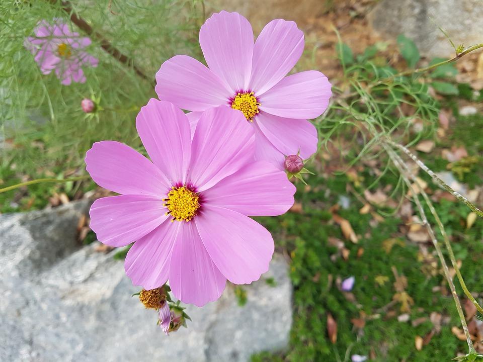 fall-flowers-1754443_960_720.jpg