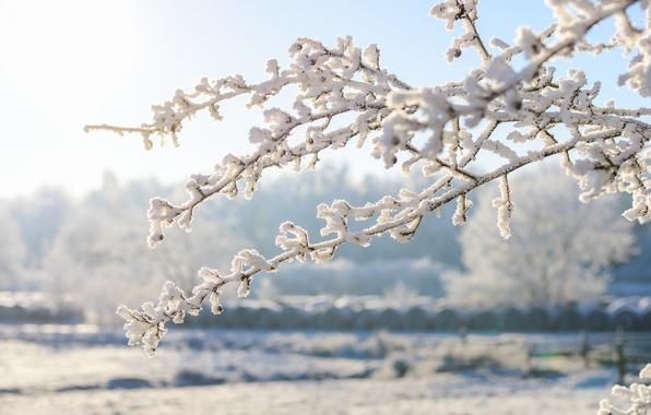 zima-vetki-inei-sneg.jpg