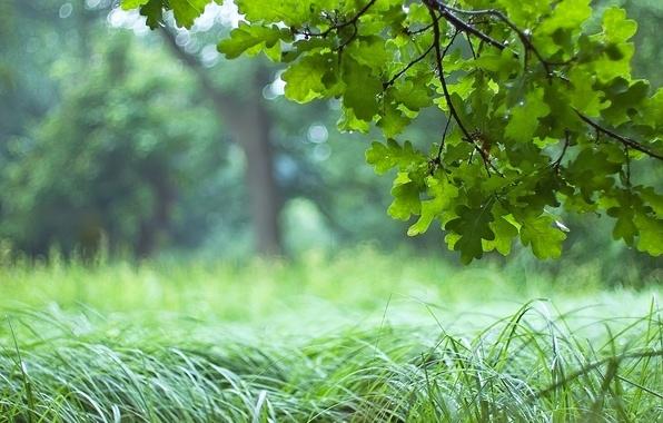 vetka-dubovye-listya-trava.jpg