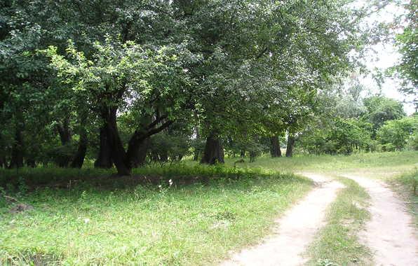 ivy-tropinka-doroga-leto.jpg