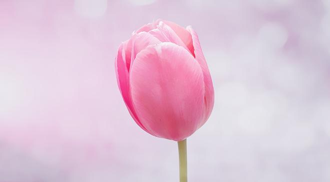 flower-8217881.jpg