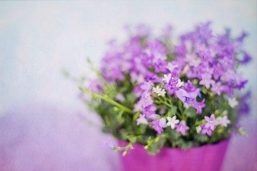 purple-flowers-2191623__340.jpg