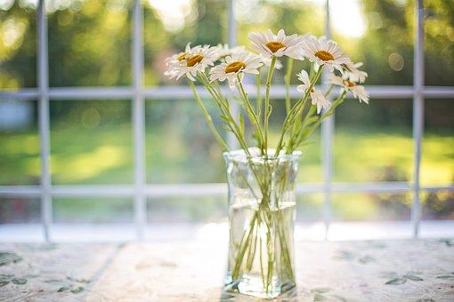 daisies-2485064__340.jpg