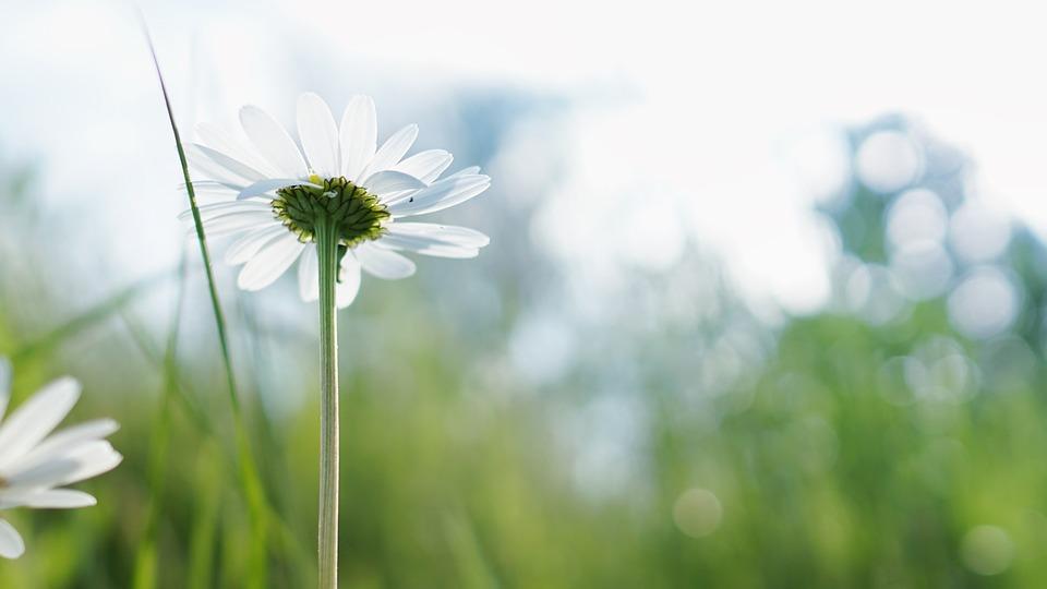 bloom-1835483_960_720.jpg