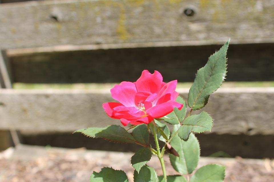 flower-387760_960_720.jpg