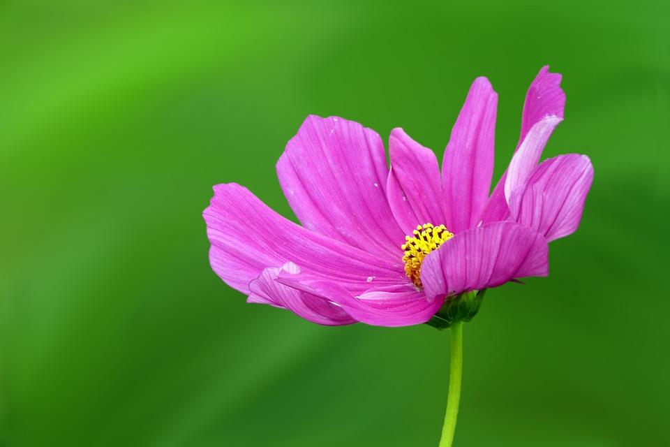 flower-1977479_960_720.jpg
