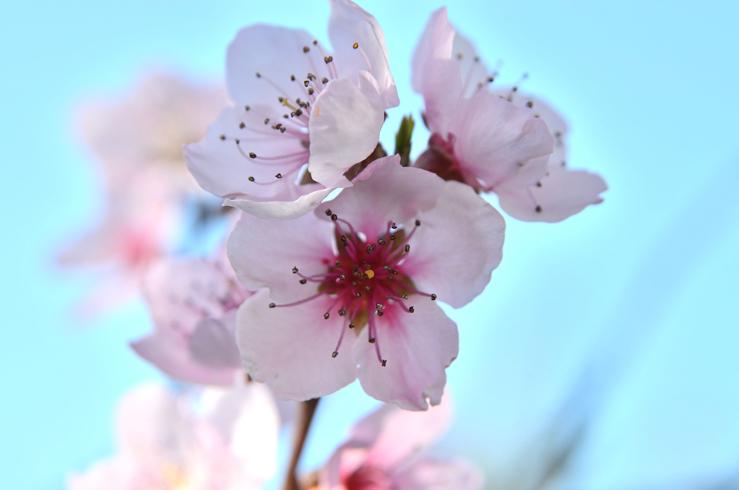 flower-908531.jpg