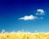 마7장 21절이 천국에 들어가는 조건으로 제시한 『하나님의 뜻』