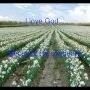 I love God because...