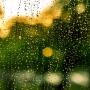 자주 내리는 비를 흡수하며