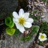 '특수 식물'을 자라게 함