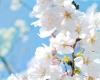 지방교회 측의 진리변증 -생명나무는 무엇인가?